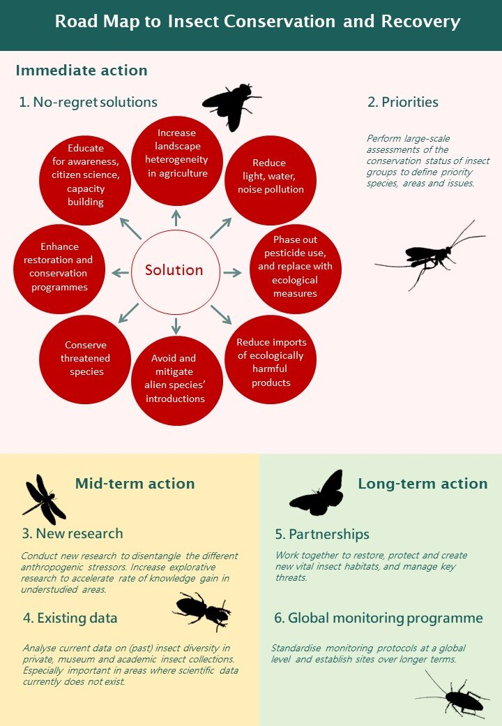 Road map to insect conservation and recovery