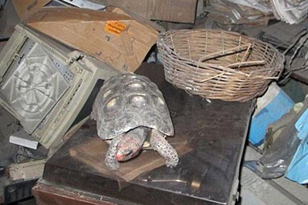 Manuela the tortoise