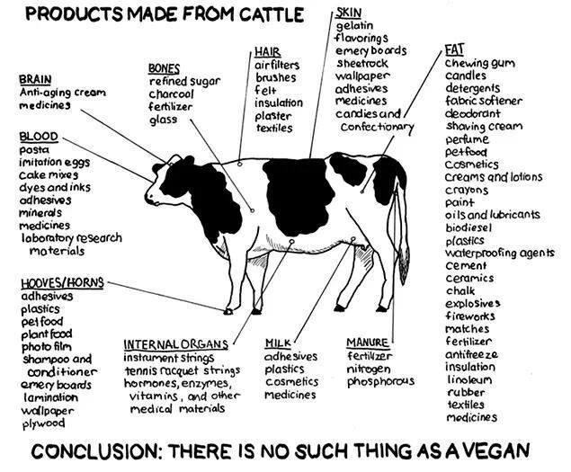 Products Made From Cattle