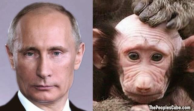 Putin And A Baby Baboon