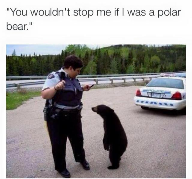 Profiling - You wouldn't stop me if I was a polar bear.