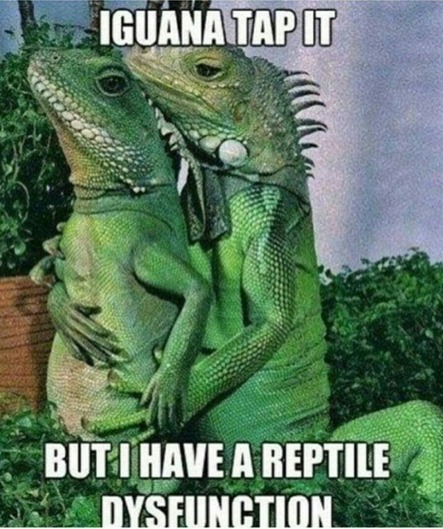 Reptiles - Iguana Tap It but I have a reptile dysfunction