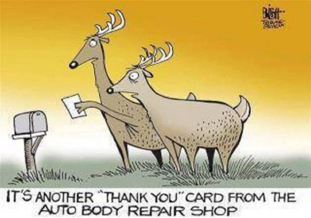 You Got Mail - Deer Thank You Card