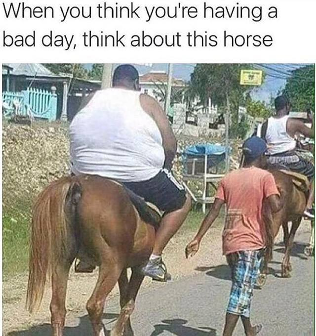 Having A Bad Day - When you think you're having a bad day, think about this horse.