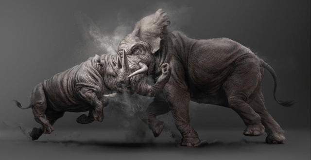 Elephant vs Rhino