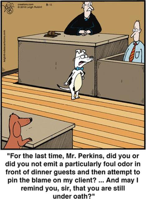 Blaming The Dog