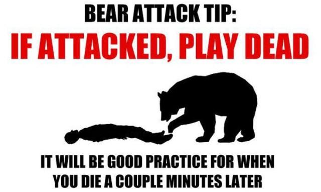 Bear Attack Tip