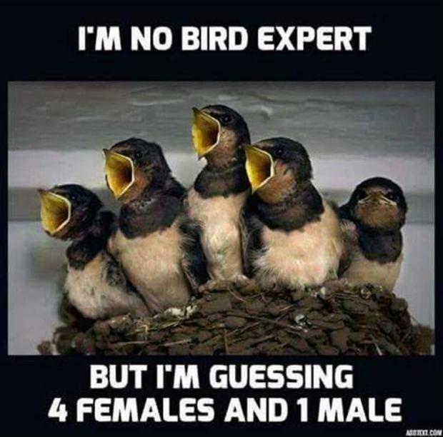bird-expert