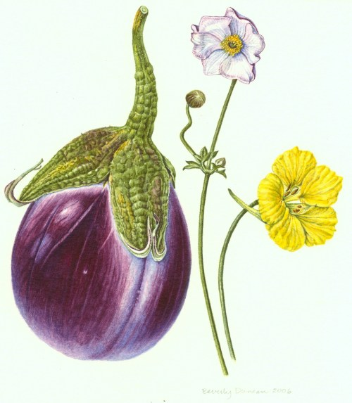 Eggplant, Japanese anemone and nastursium