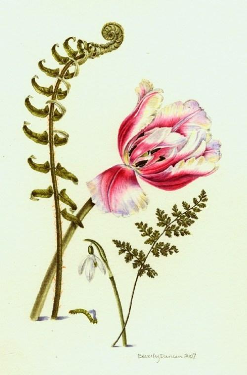 Ferns, tulip and snowdrop