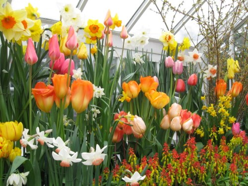 Promises of glory at Smith College Bulb Show