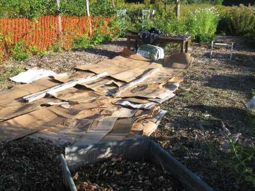 Lasagne garden