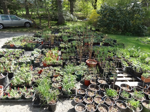 Bridge of Flowers Plant Sale perennials