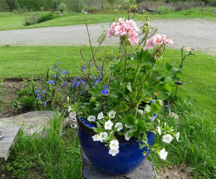 Mixed annuals in  container