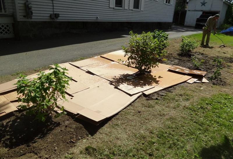 cardboard - first layer for lasagna