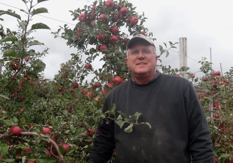 Tim Smith of Apex Orchard with his Fuji apples