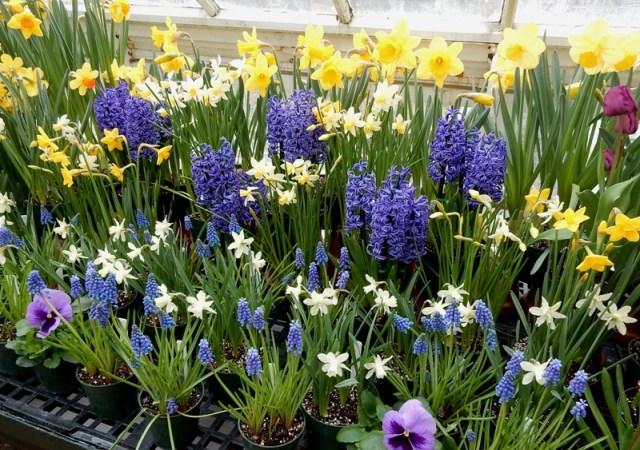 Mt Holyoke Flower Show