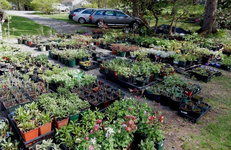 Bridge of Flowers Plant Sale