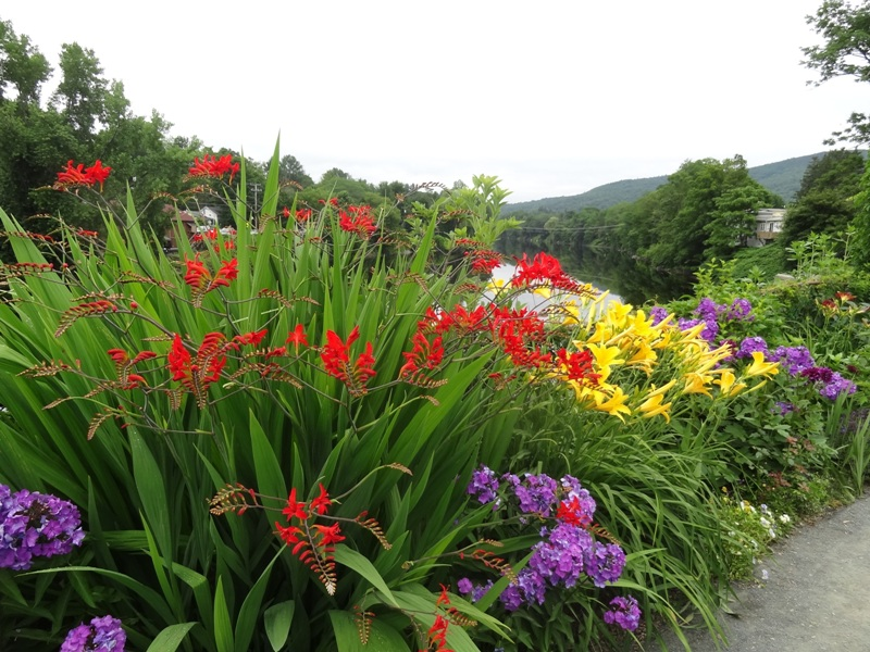Crocosmia on the Bridge of Flowers