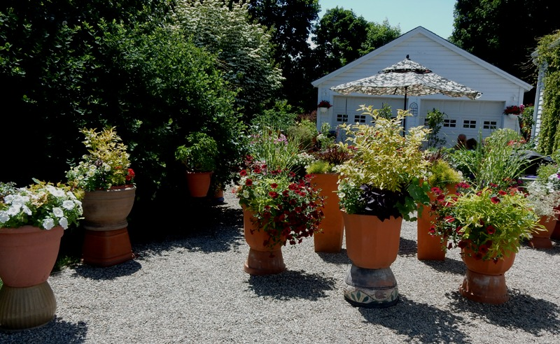 Grove of containers