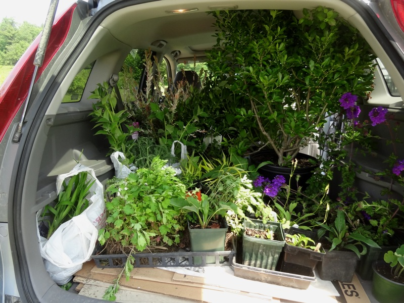 A load of Heath plants for the Greenfield garden