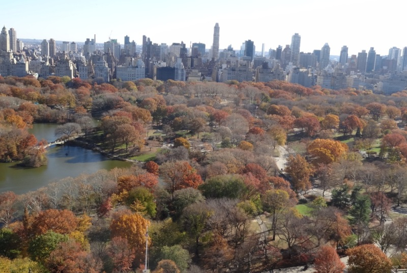 Trees in Central Park NYC