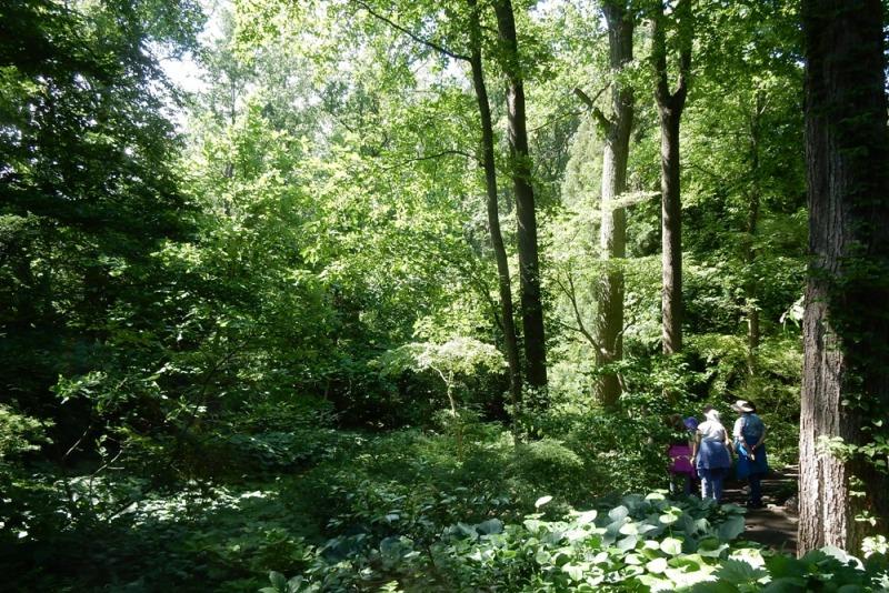 Trees in the Chanticleer Garden