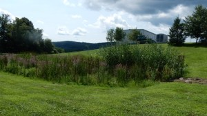Rain Garden or Retention pond