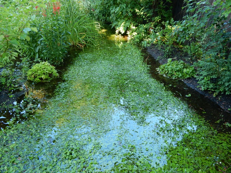 Central watery path