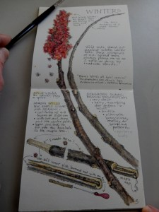 Staghorn Sumac SEEDS book