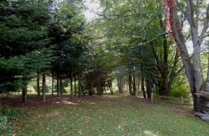 John Barry's path to his arboretum