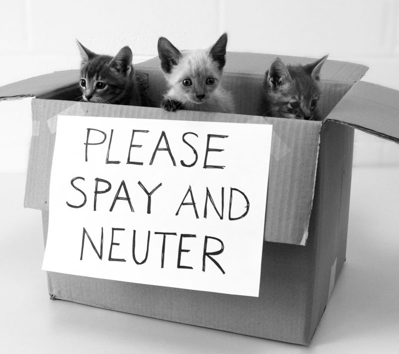 It's all about Spay/Neuter Baby