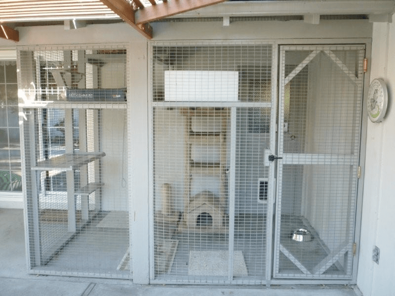 - Enclosures For Cats Community Concern For Cats