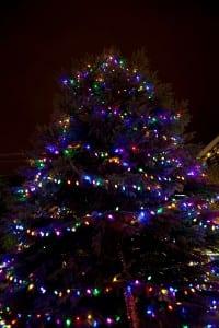 1814 Brickell Park Christmas Tree