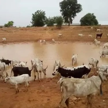 communities,  namely Taha, Bunyilli and Kpawomo in Tamale North constituency of the Sagnarigu Municipality in the Northern region share the same source of drinking water with animals.