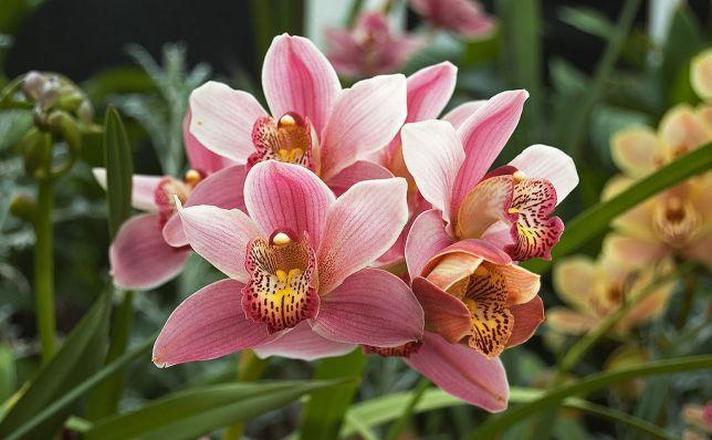 orquídeas no inverno