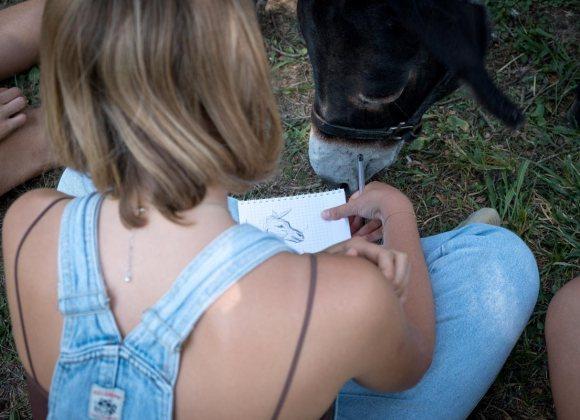 Attività con gli asini   Una ragazza disegna un asinello durante un'attività di team building