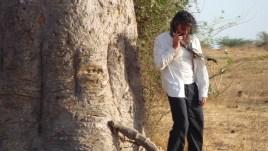 branca danse nature baobab4