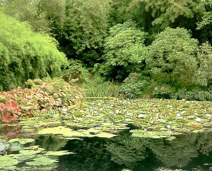 742px-scotland_inverewe_gardens