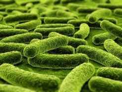 Compostage - Micro organismes et décomposeurs chimiques