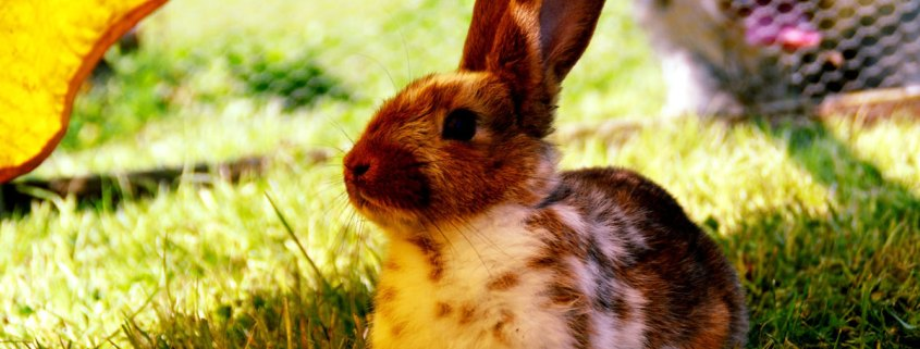 Rabbits remain one of the most misunderstood pets