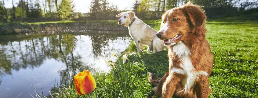 keep your pet health this Easter