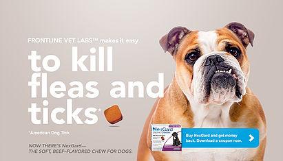 Flea and Tick Preventative