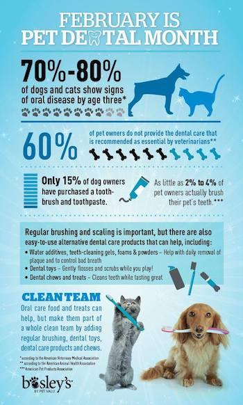 Services Companion Pet Clinic Of North Phoenix