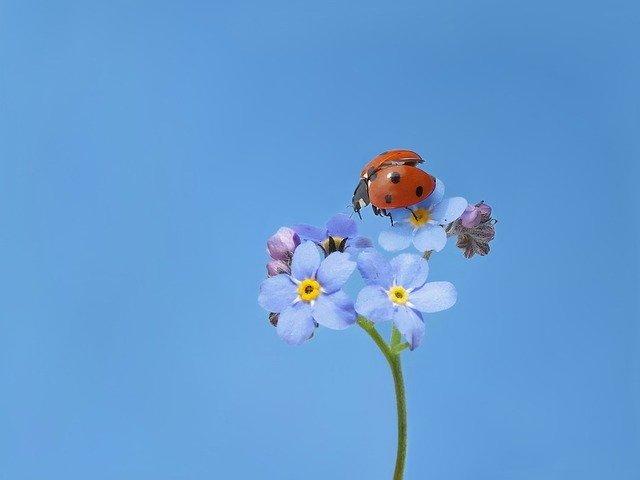 花に止まったてんとう虫