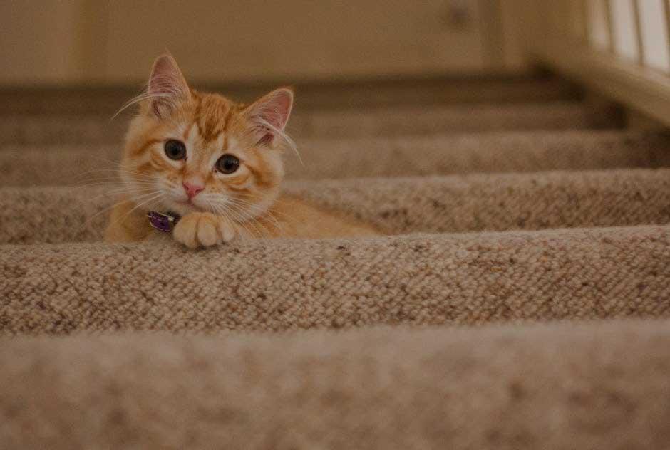 Los Mejores Rascadores para Gatos