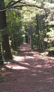 path 01
