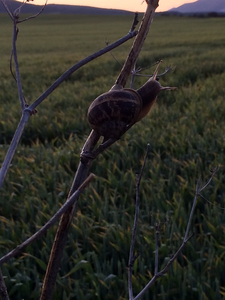 snail-at-dawn