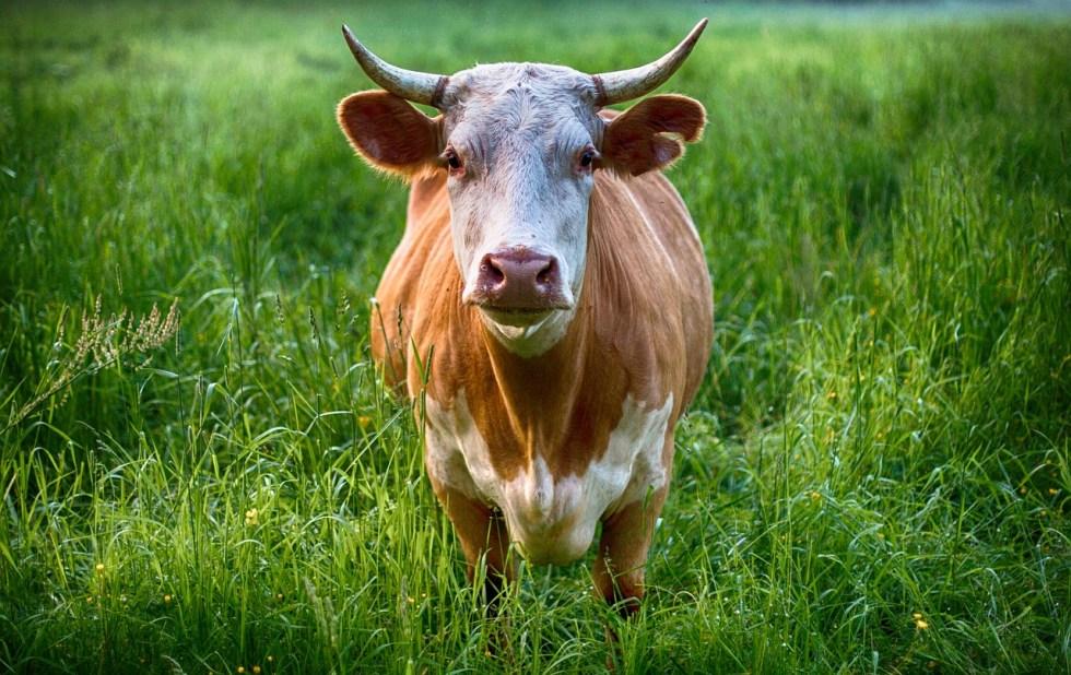 Taurus compatibility bull symbol