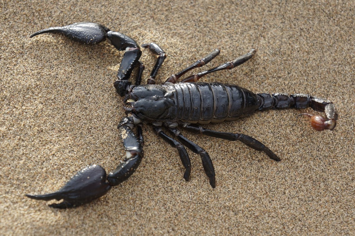 Scorpion image zodiac sign
